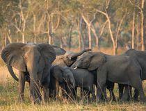 © Elephant Voices