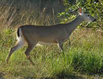 © Florida Keys National Wildlife Refuges Complex